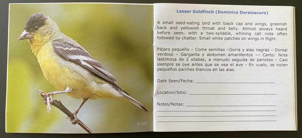 A snapshot within the Beginner's Checklist of Common Birds in Los Angeles Area.  Image of a Lesser Goldfinch, followed by species description and call.